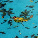 Comment entretenir une piscine hors sol ?