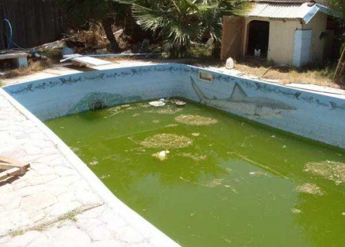 entretien-piscine1