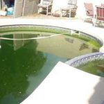 Au secours ! Les algues ont envahi ma piscine...