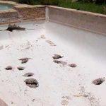 Devis piscine : 5 conseils pour choisir le bon professionnel