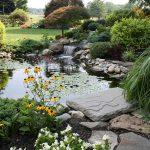 Comment Installer un Bassin dans son Jardin ?