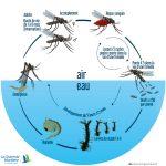 Comment Éloigner les Moustiques de Votre Piscine