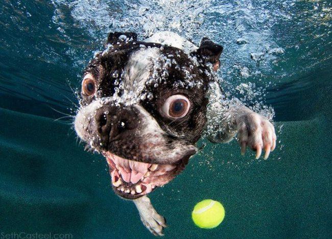 chien-sous-leau-piscine